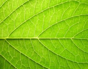 Human-Made Photosynthesis to Revolutionize Food and Energy Production