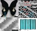 Butterfly Wings' 'Art of Blackness' Could Boost Production of Green Fuels